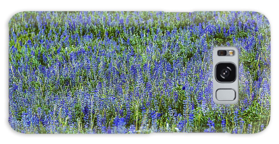 Lupine Galaxy S8 Case featuring the photograph Wild Flowers Blanket by Vishwanath Bhat