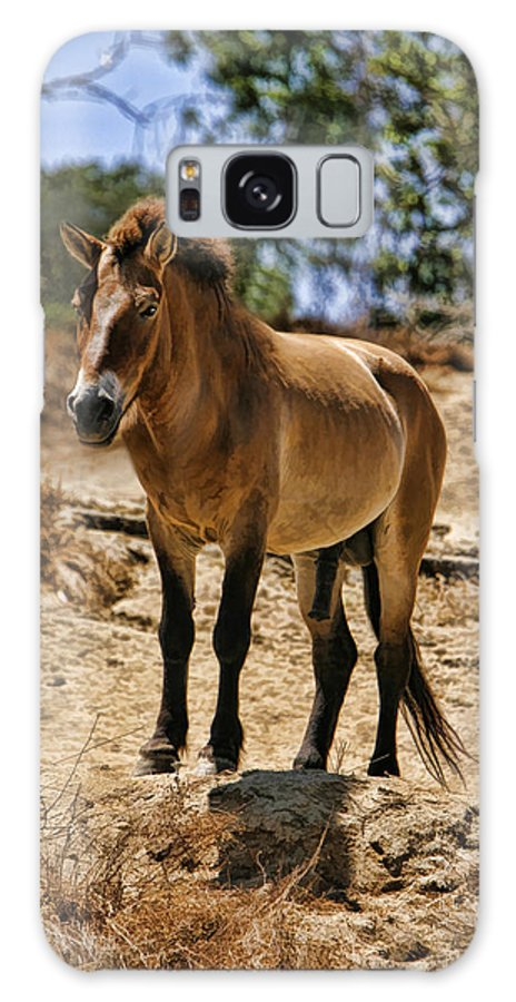 Art Photography Galaxy S8 Case featuring the photograph Wild Horse by Blake Richards