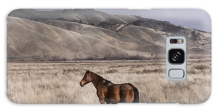 California Galaxy S8 Case featuring the photograph Wild Horse Near Fort Tejon State Park by Carol M Highsmith