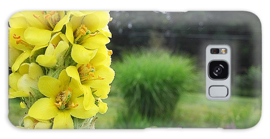 Mullein Galaxy S8 Case featuring the photograph Wild Mullein by MTBobbins Photography