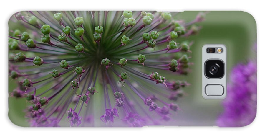 Allium Galaxy S8 Case featuring the photograph Wild Onion by Heiko Koehrer-Wagner