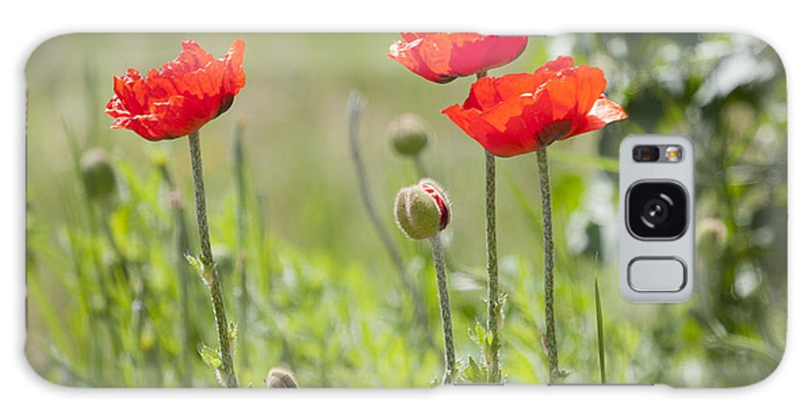 Orange Galaxy S8 Case featuring the photograph Wild Poppies by Idaho Scenic Images Linda Lantzy