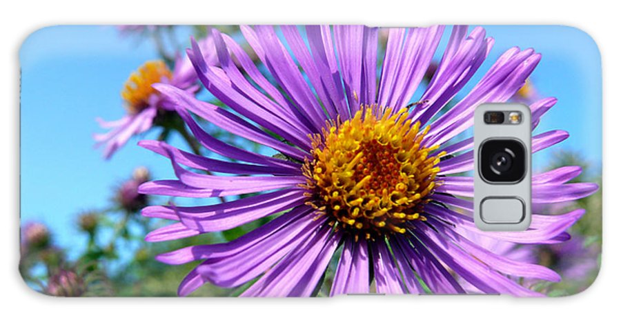 Wildflower Galaxy S8 Case featuring the photograph Wild Purple Aster by Christina Rollo