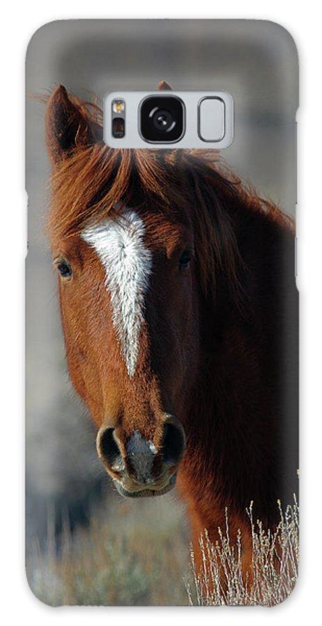 Wild Stallion Galaxy S8 Case featuring the photograph Wild Stallion by Eastern Sierra Gallery