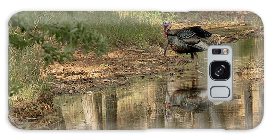 Turkey In Woods Galaxy S8 Case featuring the photograph Wild Turkey Crossing by Charles McKelroy