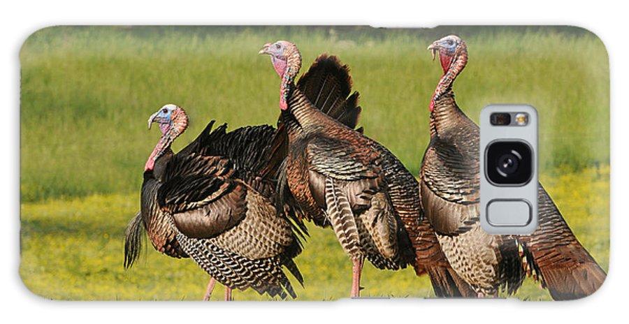 Wild Turkey Galaxy S8 Case featuring the photograph Wild Turkey Trio by Sue Jarrett