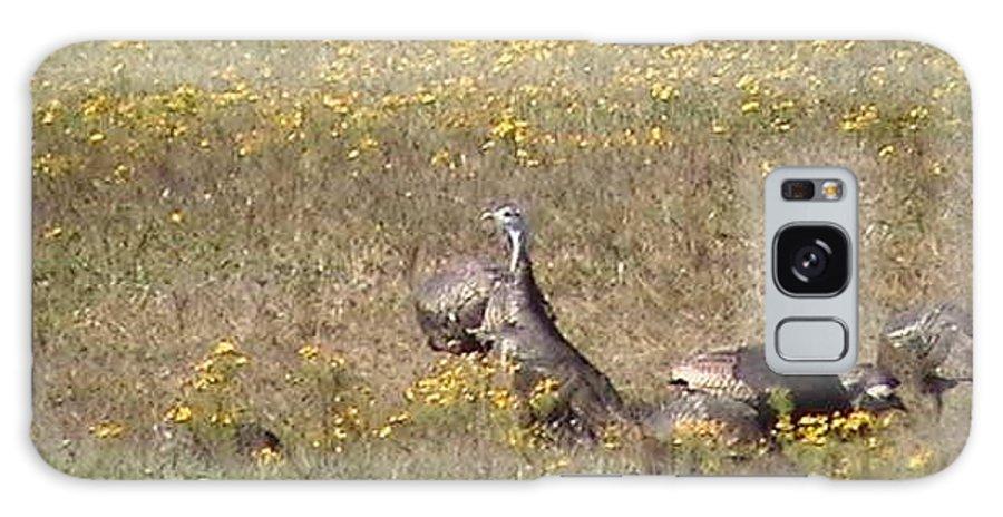 Wild Turkey Galaxy S8 Case featuring the photograph Wild Turkeys Grazing by Robin Vargo