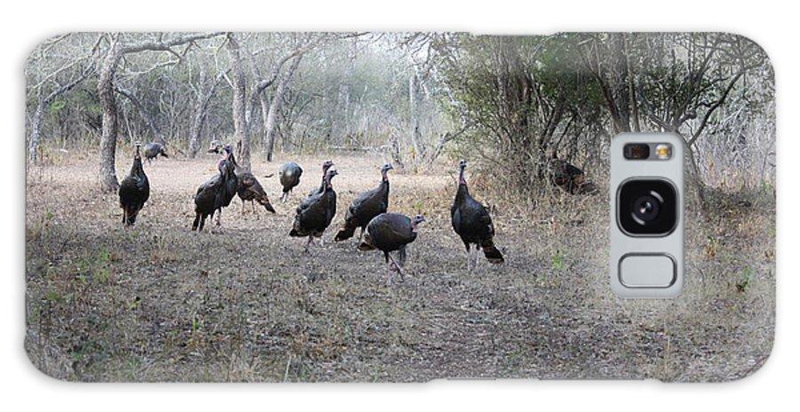 Bird Galaxy S8 Case featuring the photograph Wild Turkeys II by Jeff Tuten