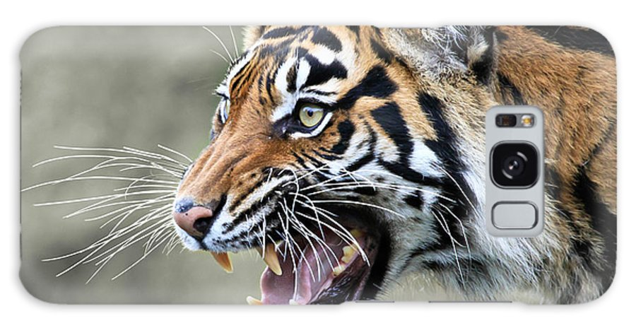Tiger Galaxy S8 Case featuring the photograph Wildcat II by Athena Mckinzie
