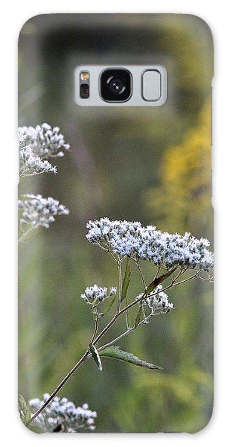 Wildflowers In September 2012 Galaxy S8 Case featuring the photograph Wildflowers In September 2012 by Maria Urso