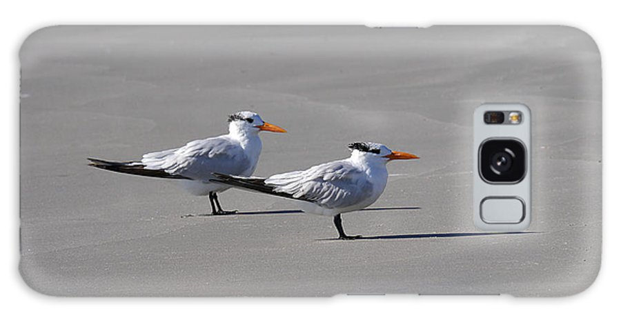 Richard Reeve Galaxy S8 Case featuring the photograph Wildwood - Royal Terns by Richard Reeve