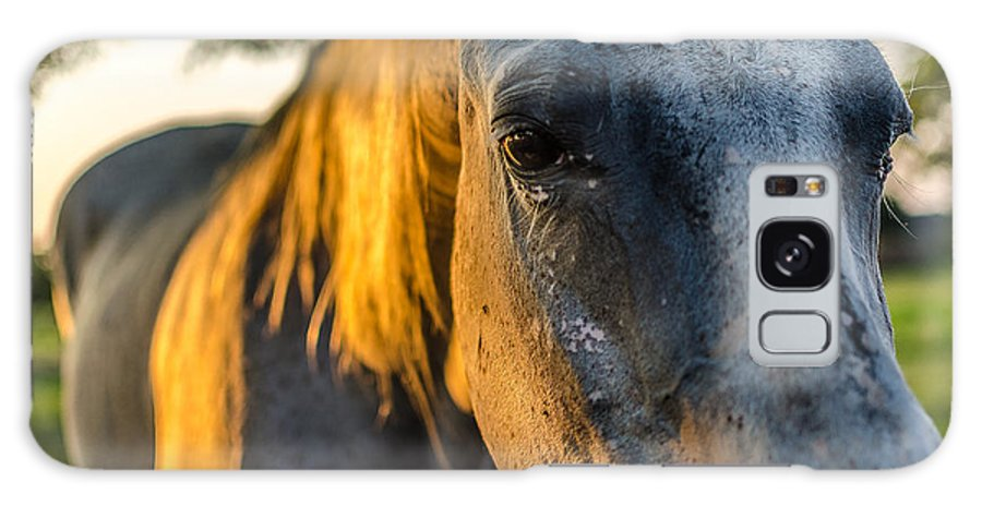 Horse Galaxy S8 Case featuring the photograph Will You Be Back Tomorrow by David Morefield