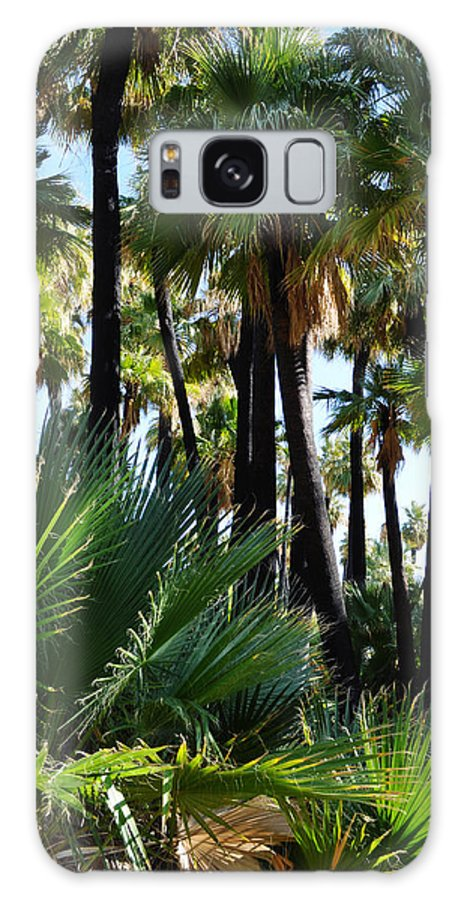 Willis Galaxy S8 Case featuring the photograph Willis Palm Oasis by Kyle Hanson
