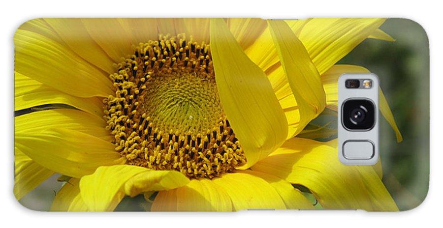 Sunflower Galaxy S8 Case featuring the photograph Windblown Sunflower One by Barbara McDevitt