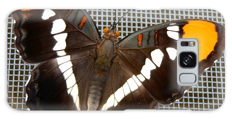 Butterfly Galaxy S8 Case featuring the photograph Winged Beauty by William McCoy