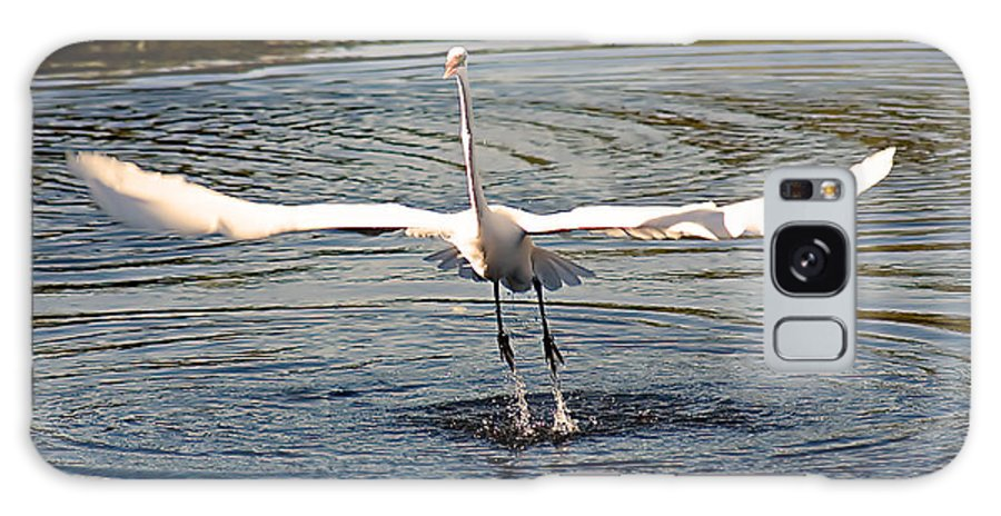 Egrets Galaxy S8 Case featuring the photograph Wingspan by Karl Ford