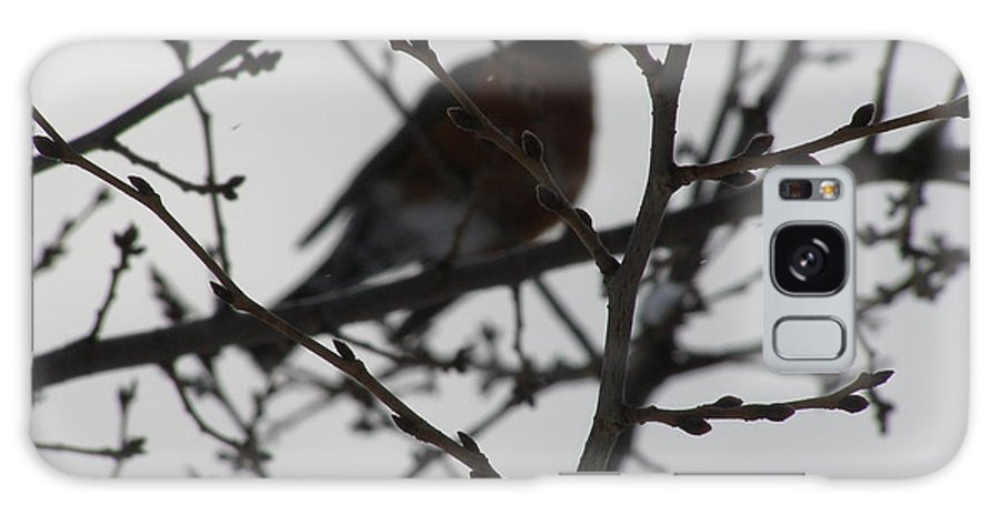 Morgantown Galaxy S8 Case featuring the photograph Winter Bird by LeLa Becker