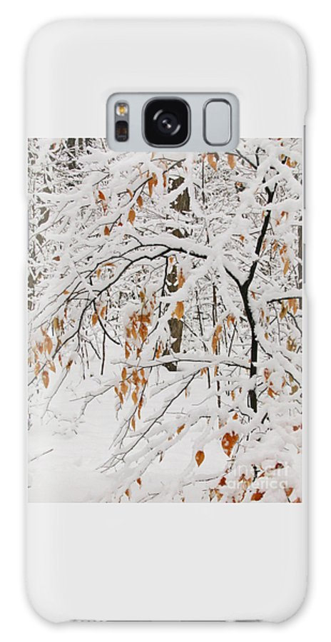 Winter Galaxy Case featuring the photograph Winter Branches by Ann Horn