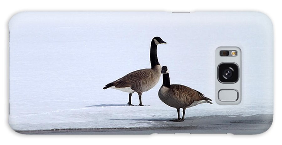 Nature Galaxy S8 Case featuring the photograph Winter Geese by Michael Sokalski