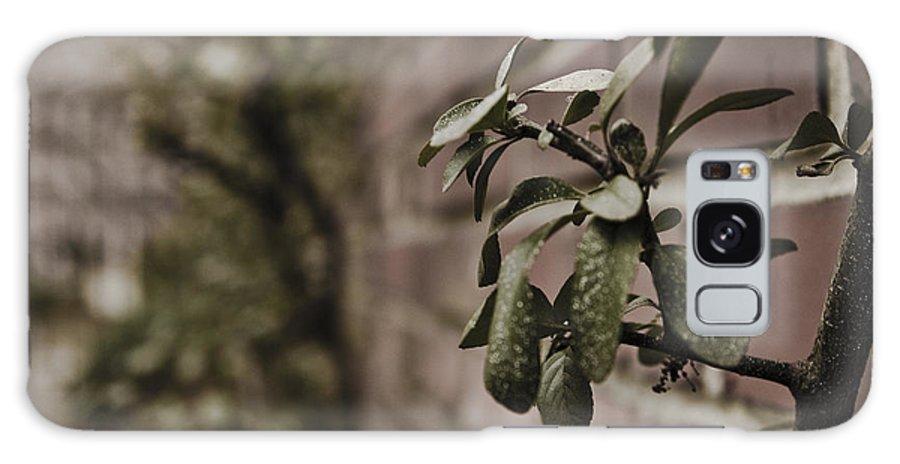 Evergreen Galaxy S8 Case featuring the photograph Winter Green by Jacin Buchanan