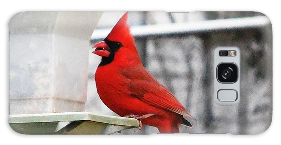 Cardinal Galaxy S8 Case featuring the photograph Winter Red Bird by Stacey Pollio
