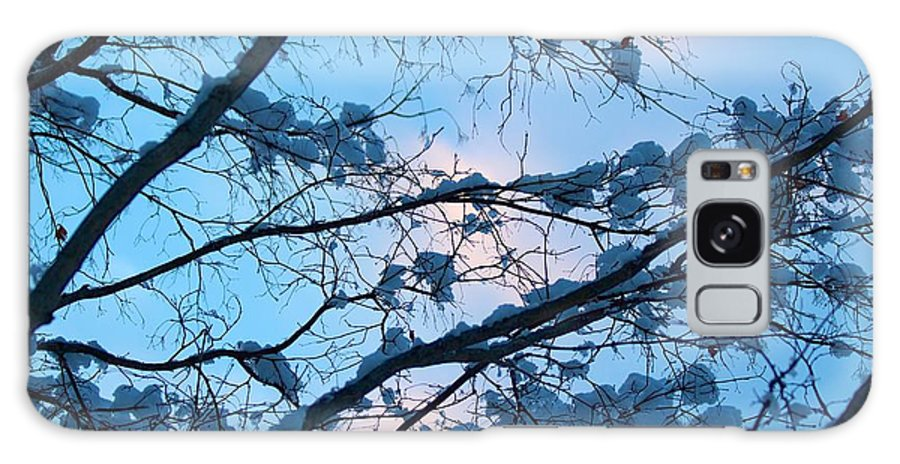 Blue Galaxy S8 Case featuring the photograph Winter Sky And Snowy Japanese Maple by Allan Morrison