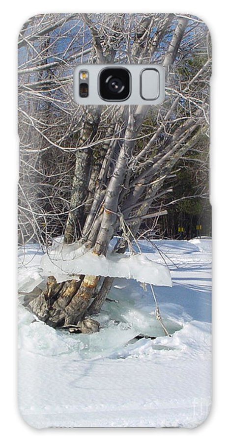 Winter Galaxy S8 Case featuring the photograph Winter Tree Skirt by Nancie Johnson