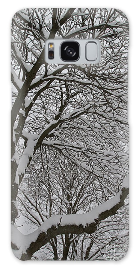 Snow Galaxy S8 Case featuring the photograph Winter Tree by William Norton