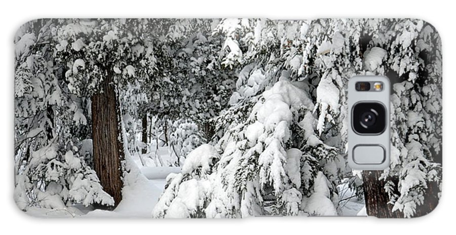 Trees Galaxy S8 Case featuring the photograph Winter Trees by Jaunine Roberts
