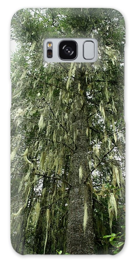 Witches Hair Galaxy S8 Case featuring the photograph Witches Hair On Tree by Amanda Holmes Tzafrir