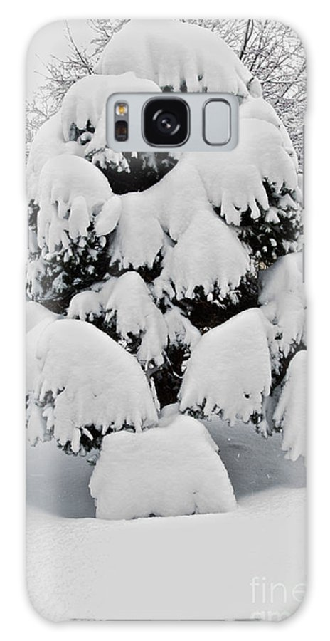 Snow Galaxy S8 Case featuring the photograph Wnter Tree 5 by William Norton