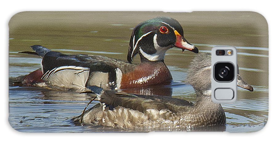 Marsh Galaxy S8 Case featuring the photograph Wood Duck Pair Dwf088 by Gerry Gantt