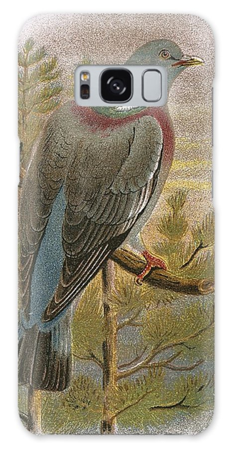 British Birds Galaxy S8 Case featuring the photograph Wood Pigeon by English School