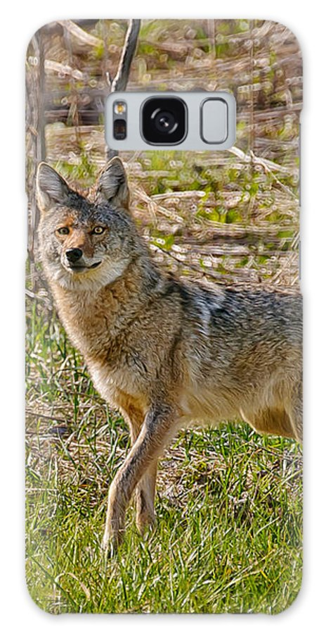 Coyote Galaxy S8 Case featuring the photograph Woodland Coyote by Timothy Flanigan