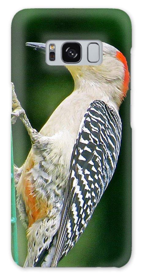 Woodpecker Galaxy S8 Case featuring the photograph Woodpecker 106 by Patsy Pratt