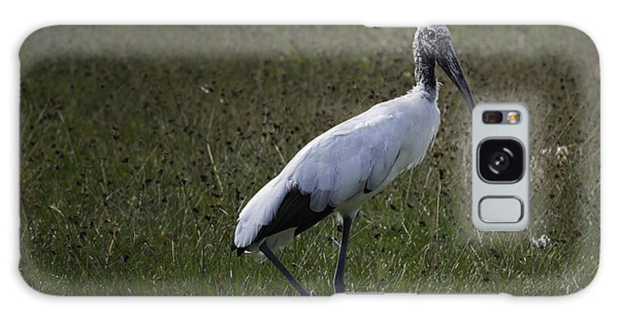 Bird Galaxy S8 Case featuring the photograph Woodstork In Field by Fran Gallogly