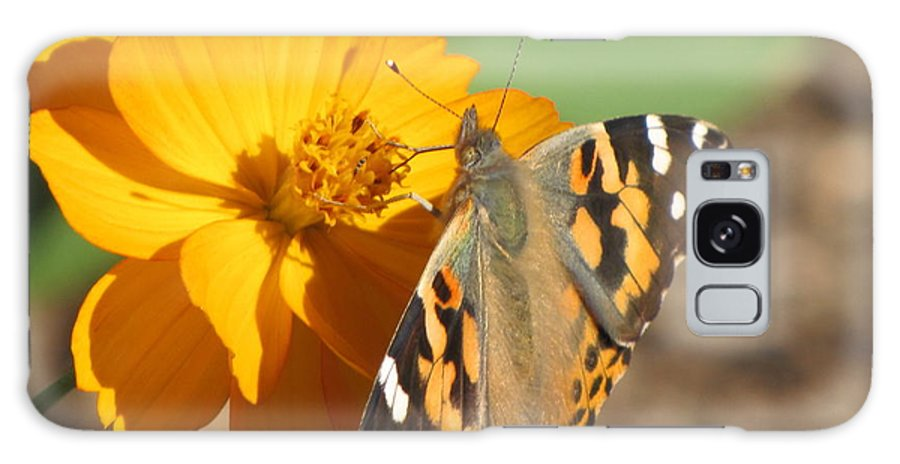Butterfly Galaxy S8 Case featuring the photograph Working Together by Karen Beasley