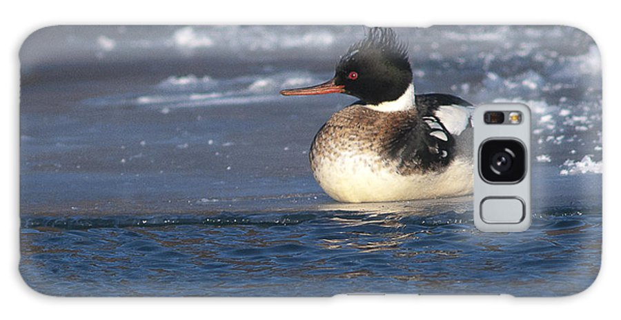 Redbreasted Merganser Galaxy S8 Case featuring the photograph Wsell Rested Redbreasted by Ward McGinnis