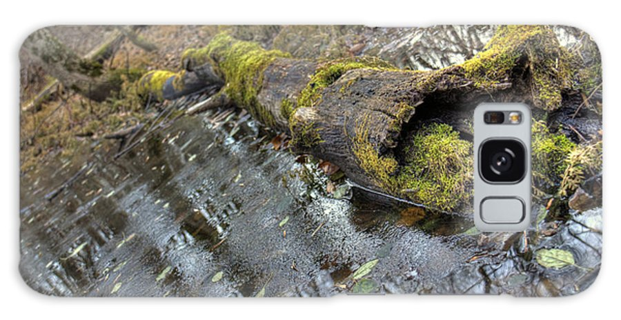 Fall Galaxy S8 Case featuring the photograph Ye Olde Mossy Log by Rich Fletcher