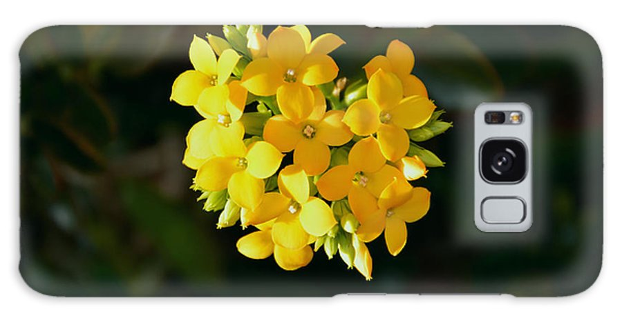 Yellow Flowers Galaxy S8 Case featuring the photograph Yellow Allegria by Ramona Matei