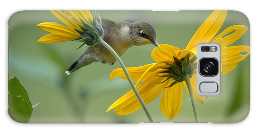 Ruby-throated Hummingbird Galaxy S8 Case featuring the photograph Yellow And Green by Cheryl Baxter