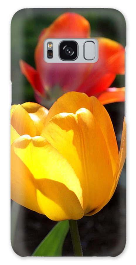 Tulip Tulips Galaxy S8 Case featuring the photograph Yellow And Red Tulips by Anne Cameron Cutri
