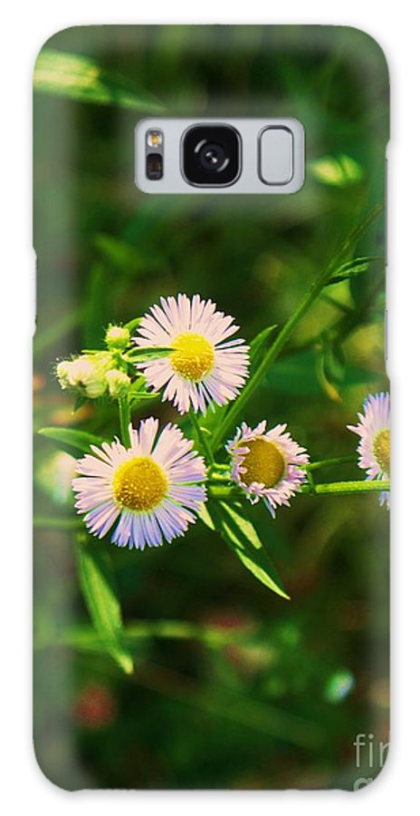 Nature Galaxy S8 Case featuring the photograph Yellow And White Dasies by Eric Schiabor