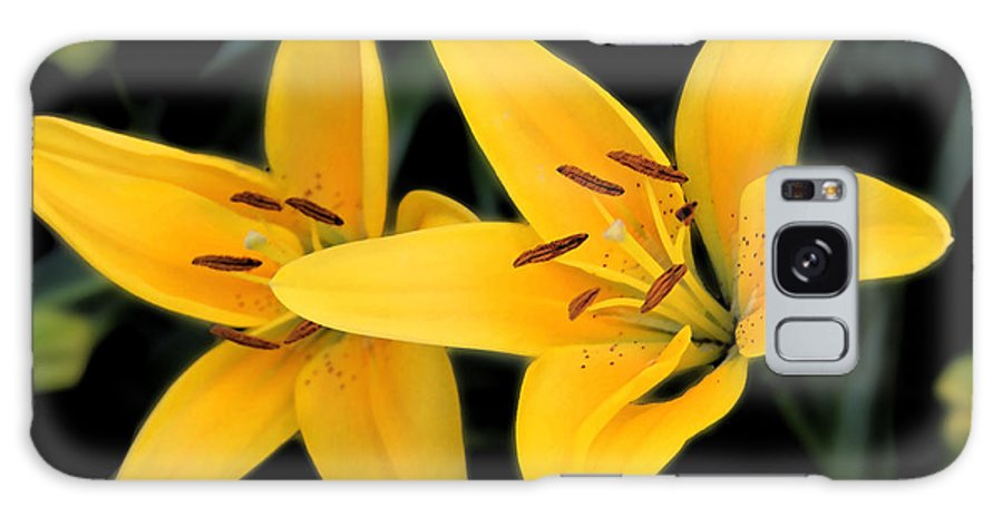 Colorado Galaxy S8 Case featuring the photograph Yellow Beauties by Bob Hislop