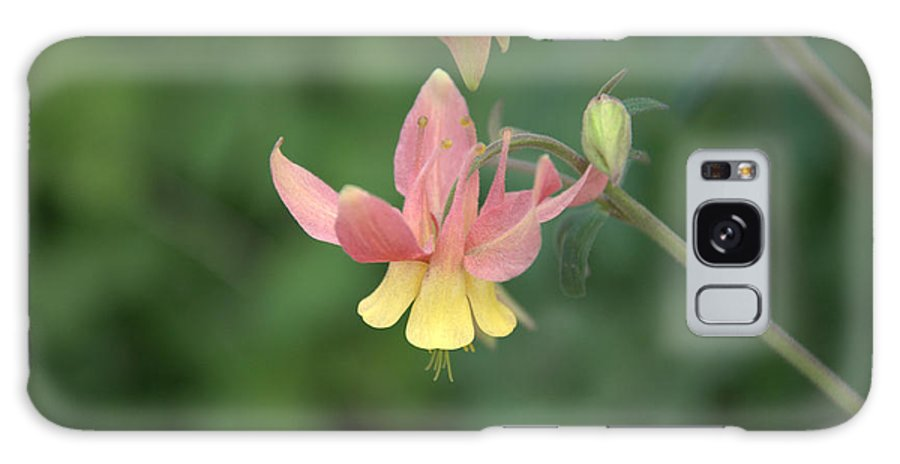 Flower Galaxy Case featuring the photograph Yellow Columbine by Frank Madia