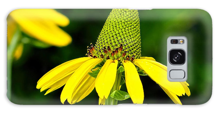 Floral Galaxy S8 Case featuring the photograph Yellow Cone Flower by Alan Hutchins