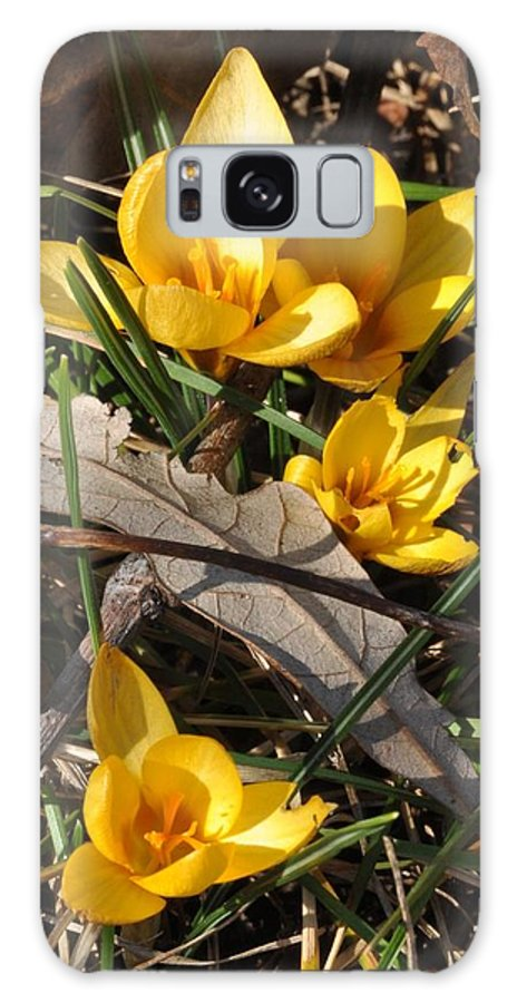 Crocus Galaxy S8 Case featuring the photograph Yellow Crocuses by Valerie Kirkwood