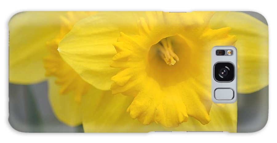 Yellow Galaxy S8 Case featuring the photograph Yellow Daffodil Floral by P S