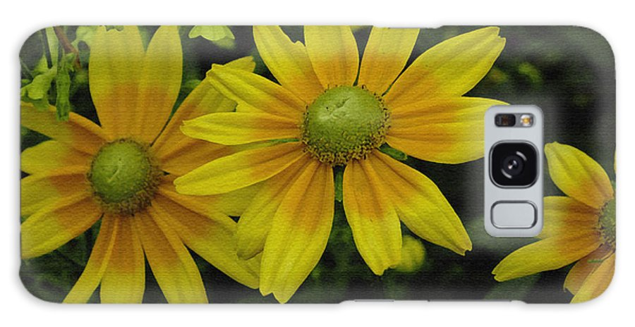 Yellow Daisies Galaxy S8 Case featuring the photograph Yellow Daisies by James C Thomas