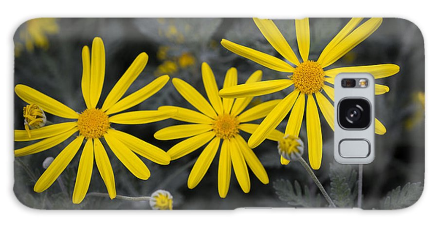 Flowers Galaxy S8 Case featuring the photograph Yellow Daisy #2 by Phil Abrams